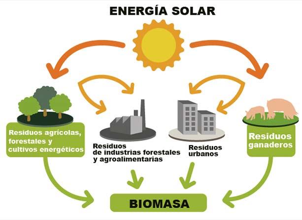 biomassa2.2_613x446
