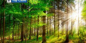 bobinas eléctricas ecológicas y sostenibles